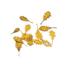 Oak Autumn - Dry Leaves - Image 1